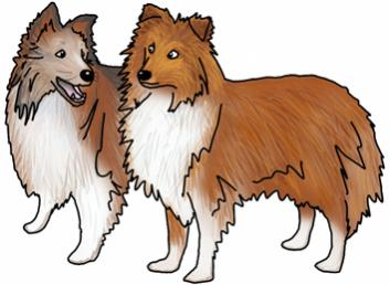 Favourite dog breed?-sheltie-sisters.jpg